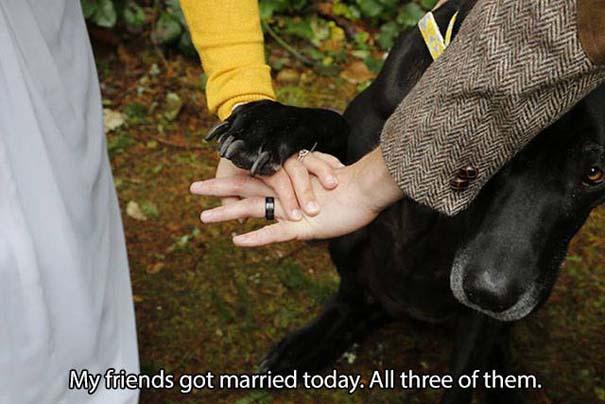 Όσοι έχουν σκύλο, καταλαβαίνουν... (2)