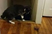Όταν οι γάτες τρομάζουν