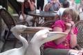 Όταν τα ζώα επιτίθενται… #2 (Video)