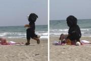 Ο Remi Gaillard σε ρόλο σκύλου