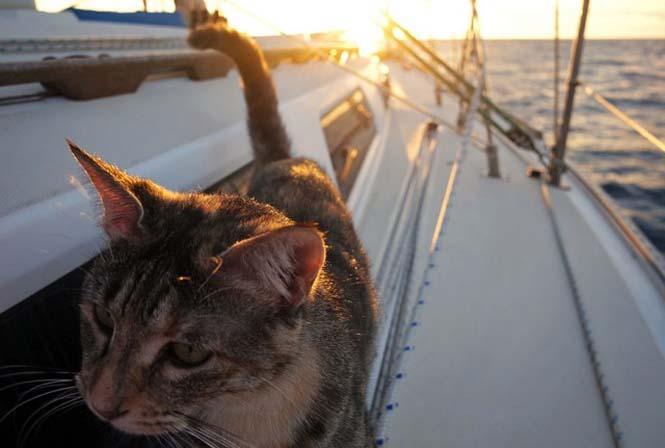 Ζευγάρι παραιτήθηκε από τις δουλειές του και πούλησε τα πάντα για να ταξιδέψει στον κόσμο με την γάτα τους (8)