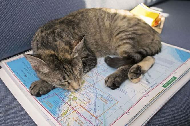 Ζευγάρι παραιτήθηκε από τις δουλειές του και πούλησε τα πάντα για να ταξιδέψει στον κόσμο με την γάτα τους (9)
