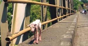 Το μόνο που χρειαζόταν αυτός ο αδέσποτος σκύλος ήταν αγάπη και φροντίδα
