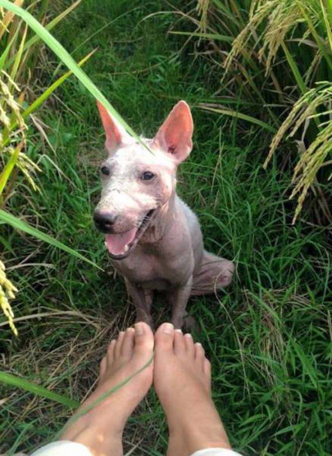 Το μόνο που χρειαζόταν αυτός ο αδέσποτος σκύλος ήταν αγάπη και φροντίδα (7)