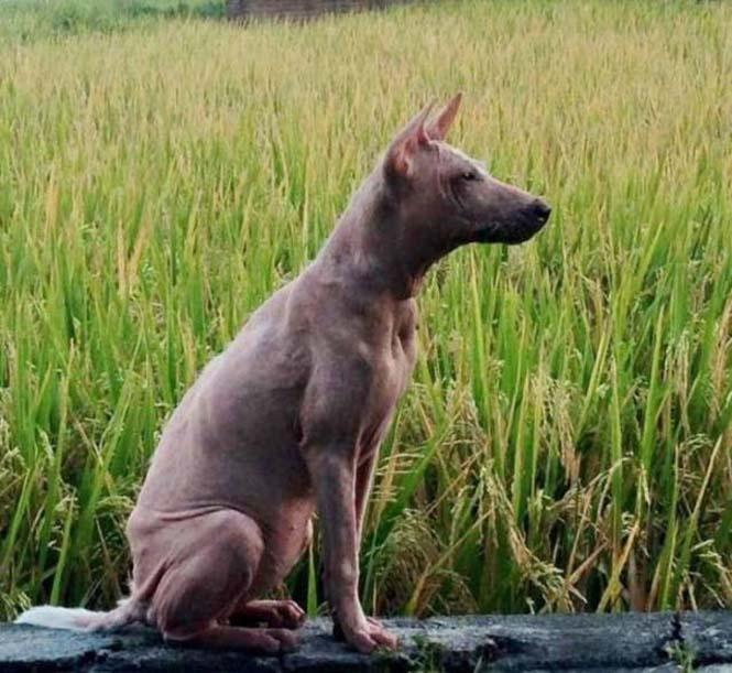Το μόνο που χρειαζόταν αυτός ο αδέσποτος σκύλος ήταν αγάπη και φροντίδα (12)
