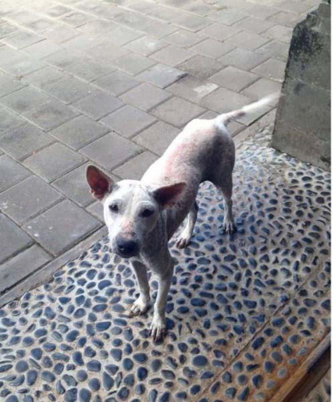 Το μόνο που χρειαζόταν αυτός ο αδέσποτος σκύλος ήταν αγάπη και φροντίδα (13)