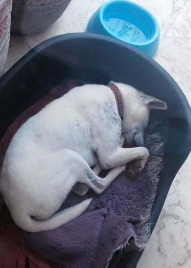 Το μόνο που χρειαζόταν αυτός ο αδέσποτος σκύλος ήταν αγάπη και φροντίδα (14)