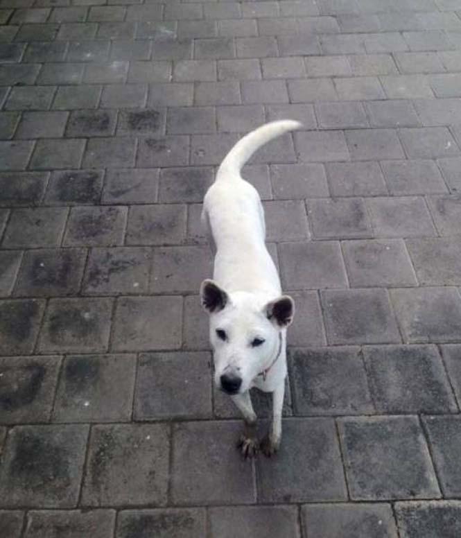 Το μόνο που χρειαζόταν αυτός ο αδέσποτος σκύλος ήταν αγάπη και φροντίδα (16)