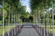 Άνδρας αφιέρωσε 4 χρόνια στην ανάπτυξη ενός ναού από δένδρα (1)