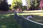 Απίθανη τούμπα από σκύλο