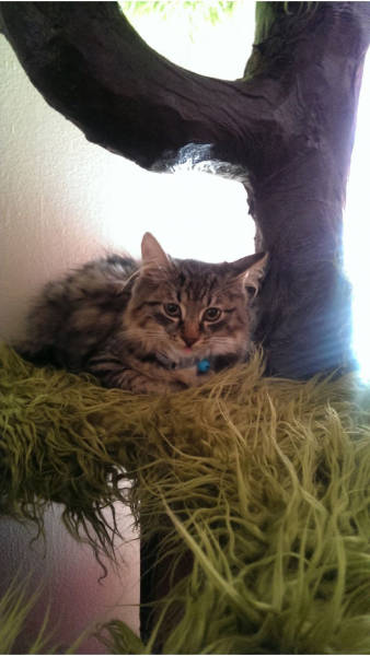 Αυτή η γάτα έχει το καλύτερο παρατηρητήριο (17)