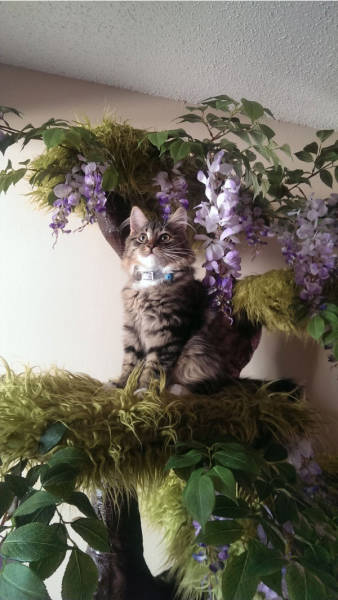 Αυτή η γάτα έχει το καλύτερο παρατηρητήριο (20)