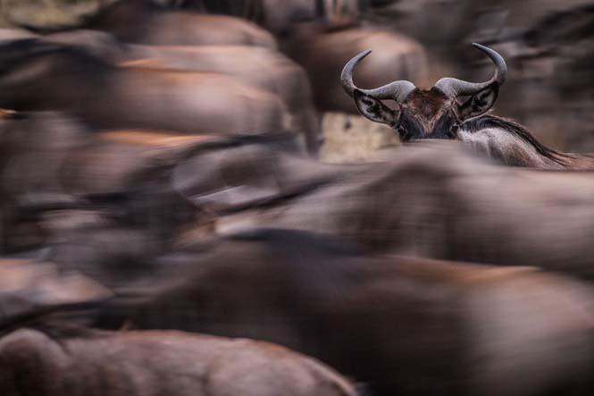 Εκπληκτικές φωτογραφίες από τον διαγωνισμό National Geographic Traveler 2015 (6)