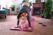 Γάτες και σκύλοι που δεν συμφωνούν με την Yoga