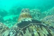 Great Barrier Reef από την οπτική μιας χελώνας