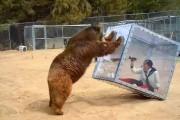 Γυναίκα κλεισμένη σε διάφανο κουτί αφήνεται στο έλεος πεινασμένης αρκούδας