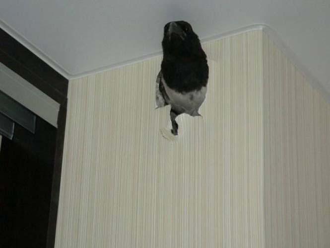 Ιδιοκτήτες σπιτιού ανακάλυψαν κάτι πολύ περίεργο κολλημένο στον τοίχο τους (4)