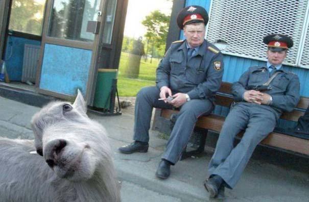 Photobombing Αστείες Φωτογραφίες #97 (8)