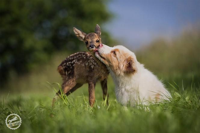 Μια αξιολάτρευτη φιλία   Φωτογραφία της ημέρας