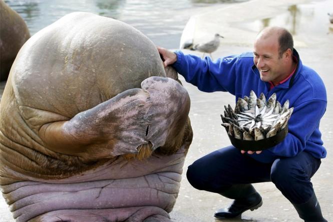 Έκπληξη γενεθλίων για έναν θαλάσσιο ίππο | Φωτογραφία της ημέρας