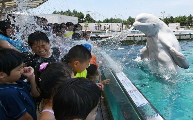 Η έκπληξη μιας φάλαινας στους επισκέπτες ενός θαλάσσιου πάρκου   Φωτογραφία της ημέρας