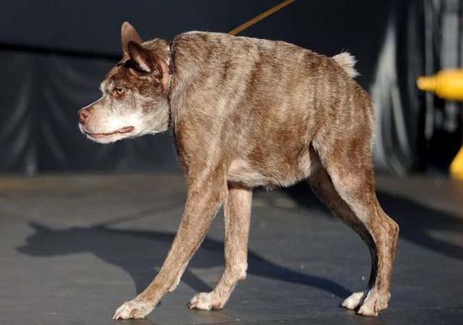 Αυτός είναι ο πιο άσχημος σκύλος στον κόσμο για το 2015 (1)