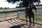 Πως να τιθασεύσετε ένα άλογο σε 6 λεπτά