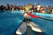 Σκίουρος που κάνει θαλάσσιο σκι