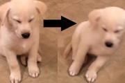 Σκύλοι που έχασαν την μάχη με τον ύπνο