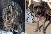 Σκύλοι πριν και μετά τη διάσωση τους #6 (1)