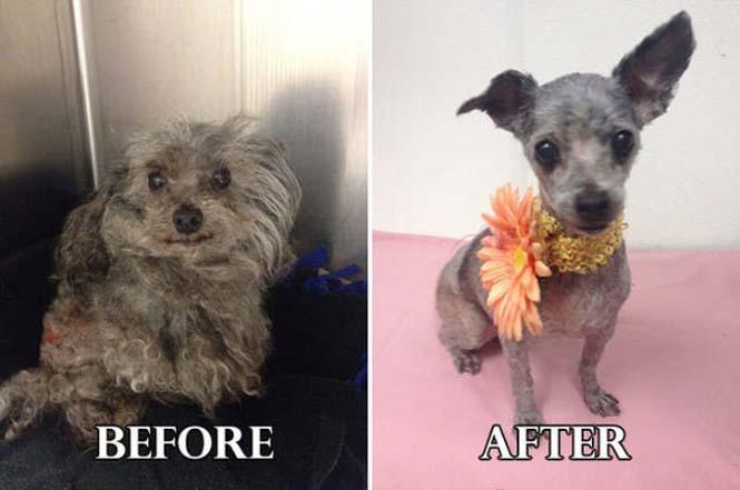 Σκύλοι πριν και μετά τη διάσωση τους #6 (2)