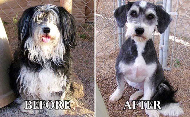 Σκύλοι πριν και μετά τη διάσωση τους #6 (3)