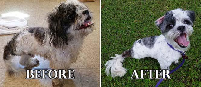 Σκύλοι πριν και μετά τη διάσωση τους #6 (4)