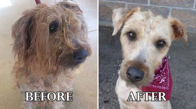 Σκύλοι πριν και μετά τη διάσωση τους #6 (5)
