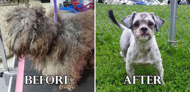Σκύλοι πριν και μετά τη διάσωση τους #6 (6)