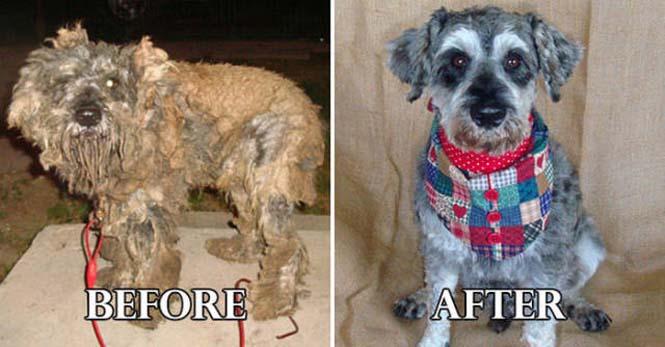 Σκύλοι πριν και μετά τη διάσωση τους #6 (7)
