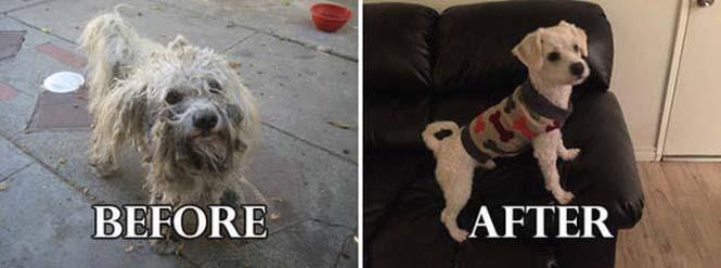 Σκύλοι πριν και μετά τη διάσωση τους #6 (8)