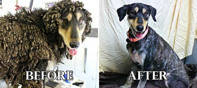 Σκύλοι πριν και μετά τη διάσωση τους #6 (9)