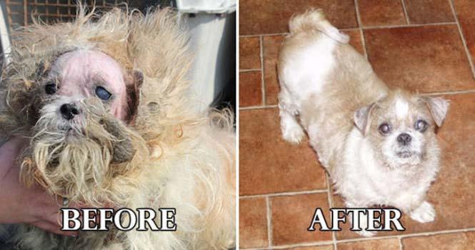 Σκύλοι πριν και μετά τη διάσωση τους #6 (10)