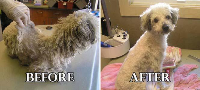 Σκύλοι πριν και μετά τη διάσωση τους #6 (11)