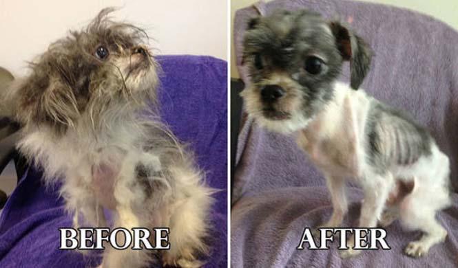 Σκύλοι πριν και μετά τη διάσωση τους #6 (12)