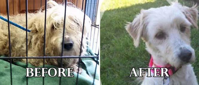 Σκύλοι πριν και μετά τη διάσωση τους #6 (13)