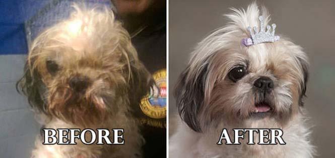 Σκύλοι πριν και μετά τη διάσωση τους #6 (14)