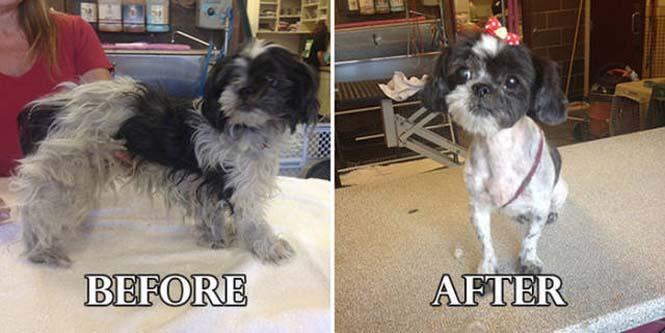 Σκύλοι πριν και μετά τη διάσωση τους #6 (15)