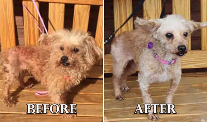 Σκύλοι πριν και μετά τη διάσωση τους #6 (17)