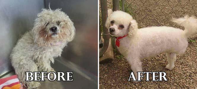 Σκύλοι πριν και μετά τη διάσωση τους #6 (18)