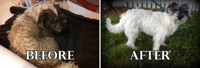 Σκύλοι πριν και μετά τη διάσωση τους #6 (19)