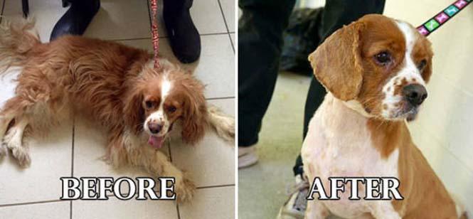 Σκύλοι πριν και μετά τη διάσωση τους #6 (20)