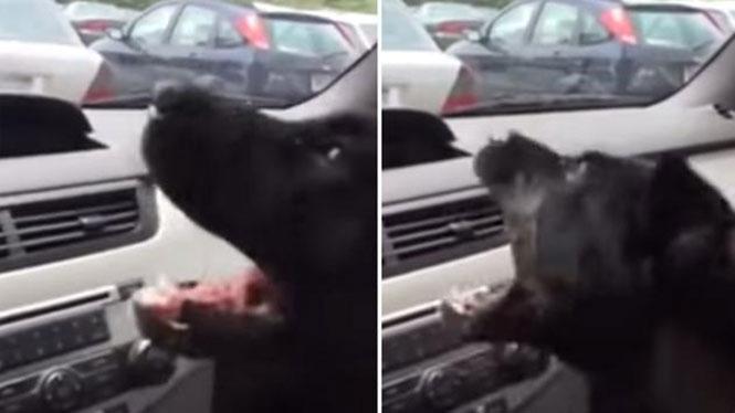 Σκύλος ανακαλύπτει το air condition του αυτοκινήτου και τρελαίνεται
