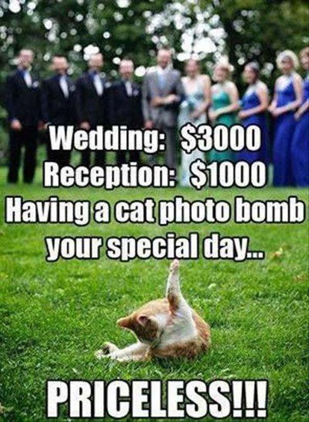 Αστείες φωτογραφίες γάμων #49 (9)